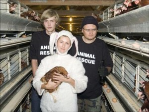 The moral shock opens our eyes to animal cruelty. Photo credit: Animal Liberation Victoria